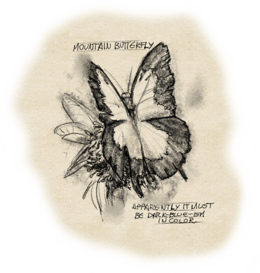 image-butterfly